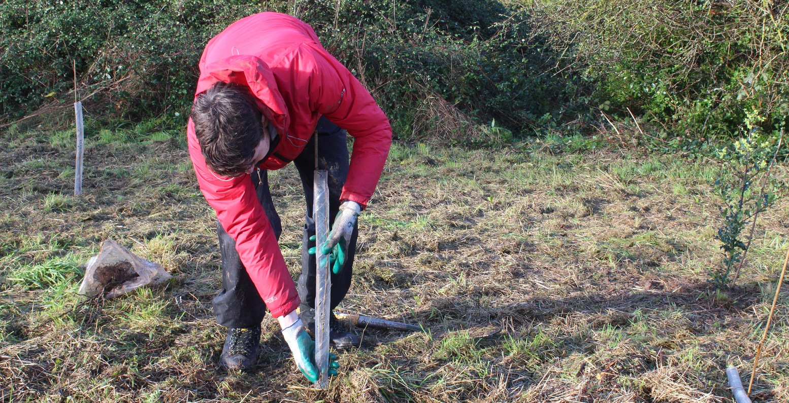 Bristol Energy employee planting a tree