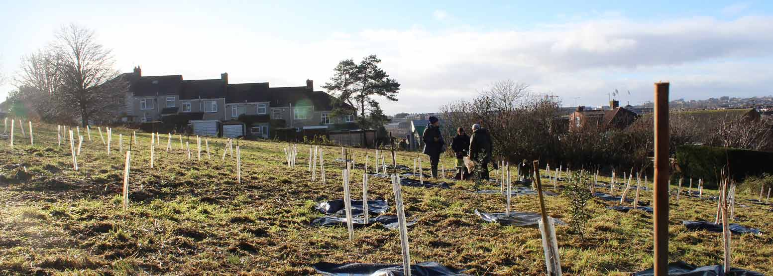 Planting trees as part of the one tree per child project