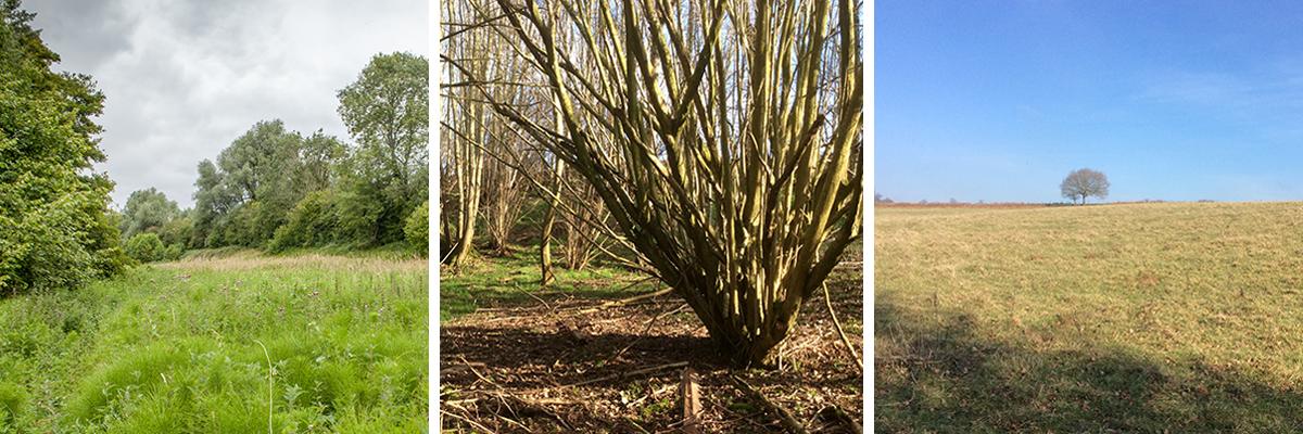 Avon Needs Trees Hazeland land montage
